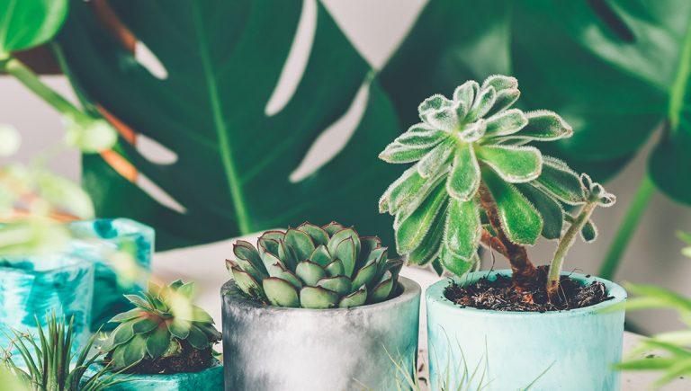 Pflanzen und Sukkulenten in Blumentöpfen