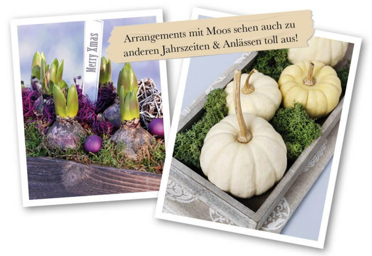 Arrangements mit Moos und Blumezwiebeln oder Kürbisen