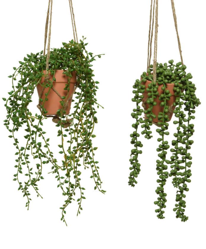 Dekorative Hängepflanzen