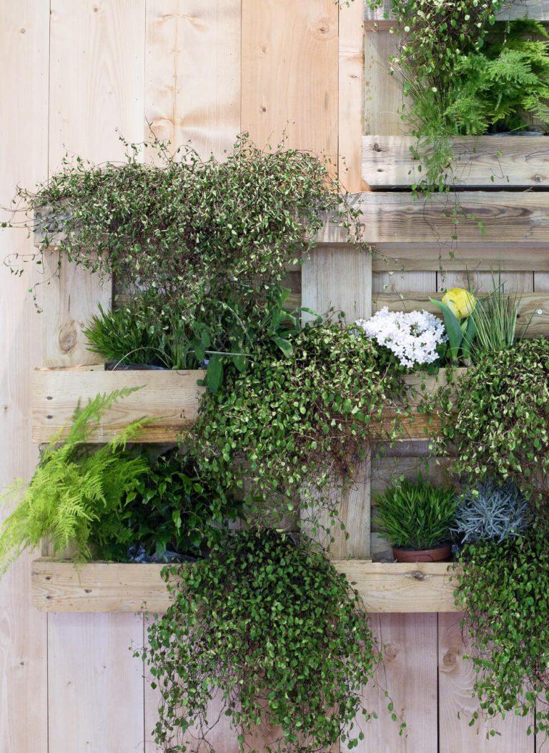 Pflanzen an einer Balkonwand