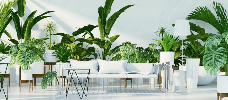 Weißer Sofa mit vielen Grünpflanzen im Hintergrund