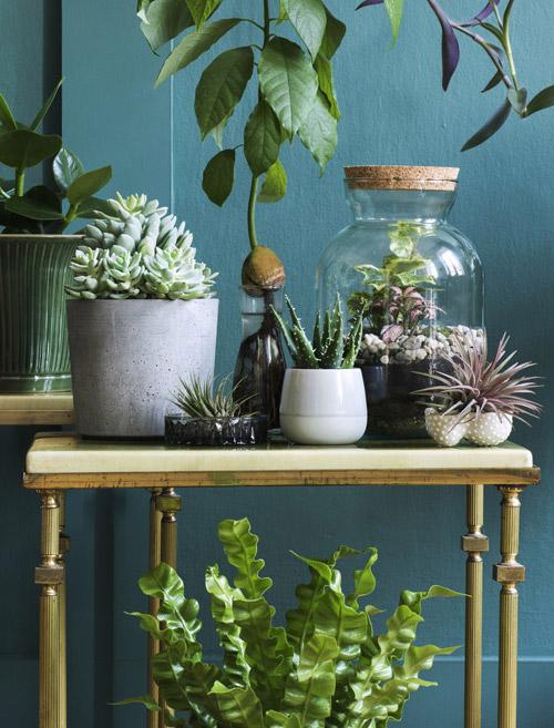 Pflanzen auf Tisch vor dunkler Wand